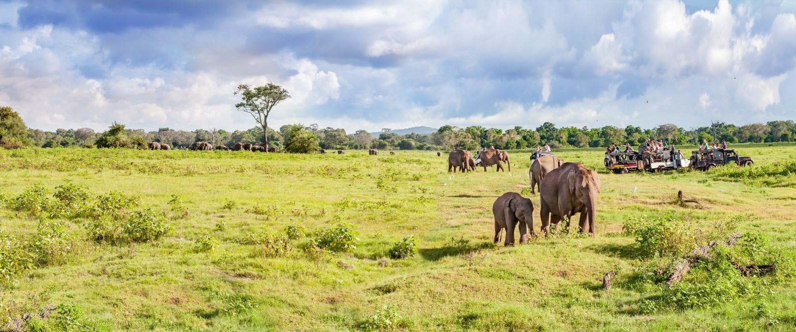 Safari with Elephants